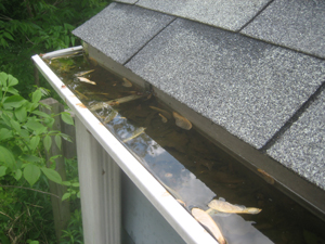 I cleaned Rob's Gutters today.  They smelled really bad.